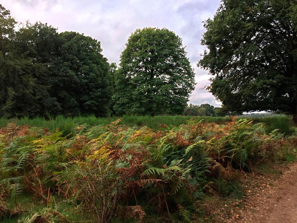 Die Wahner Heide